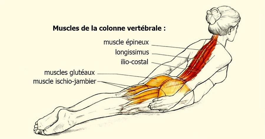 Exercice pour le mal de dos - grotte sel 8e8c3e6335c