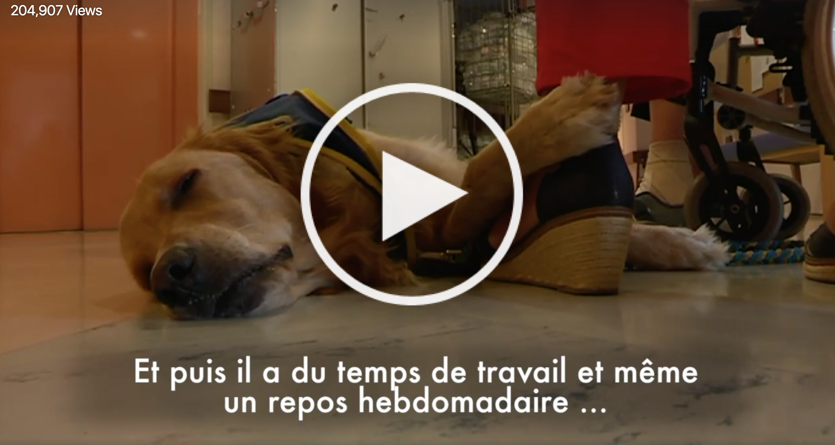 La vidéo de l'infirmier Jeep, le chien thérapeutique, devient virale !